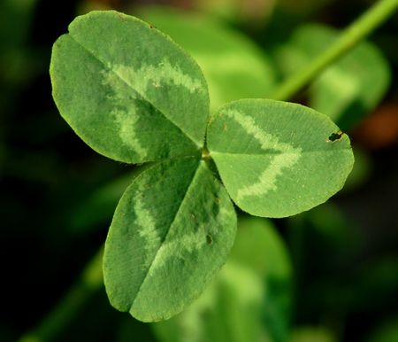 The World Around Us: Why Is Clover Lucky?