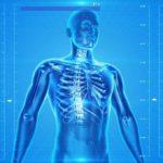 uman Skeleton, Human Body, Anatomy