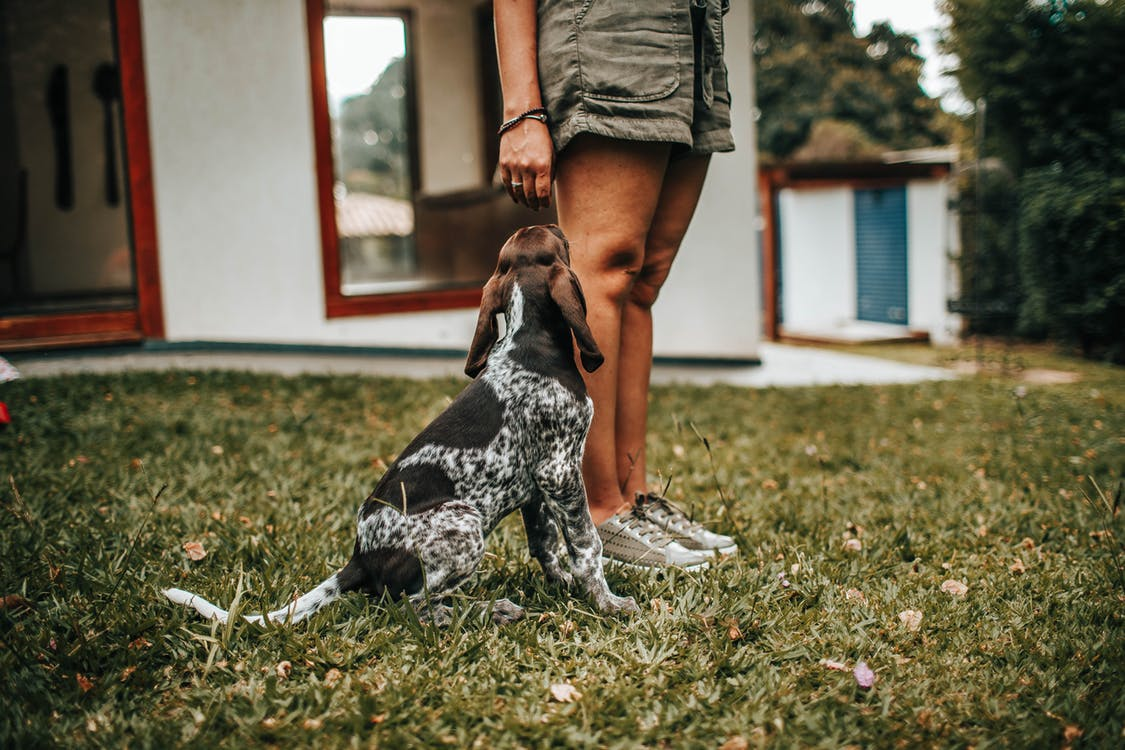 Photo of Dog and Person on Grass